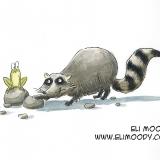raccoon-colors