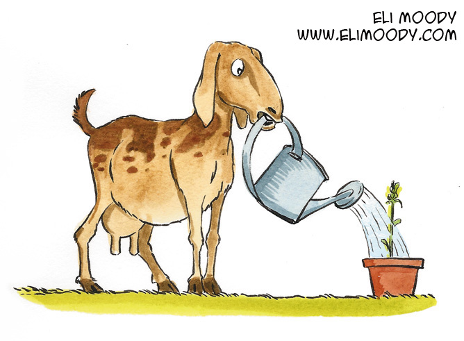 watering goat colors fb