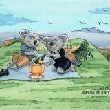 A koala picnic